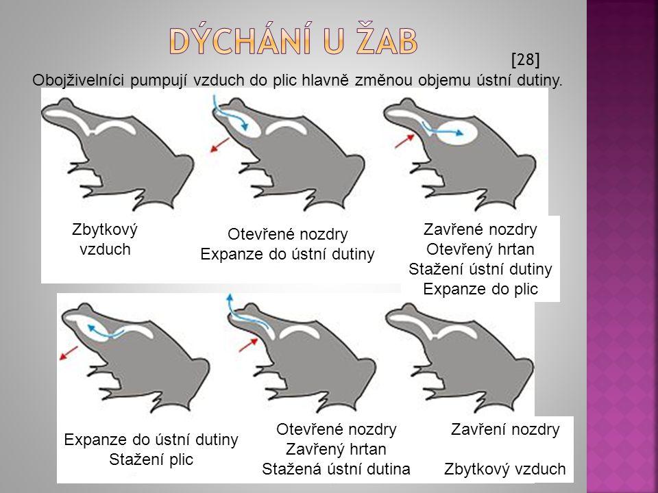 Dýchání u žab [28] Obojživelníci pumpují vzduch do plic hlavně změnou objemu ústní dutiny. Zbytkový vzduch.